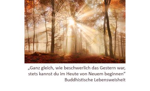 dieses Foto zeigt Sonnenstrahlen in einem Wald