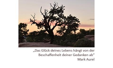 dieses Foto der Praxis für Psychotherapie (HPG) zeigt einen Baum